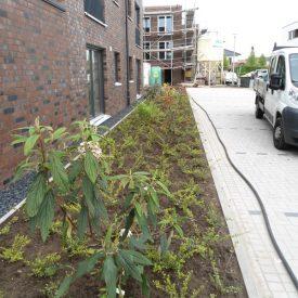 Neubepflanzung im Neubaugebiet